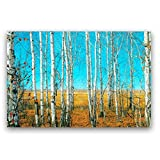 Studio 500, Museum Quality Canvas Print Art - The Naked Forest of Birch Trees in Autumn, 48'' x 32'' High Resolution Giclee Printing, from our Landscapes Collection, B1883 ST