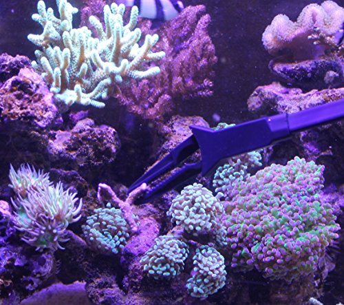 AquaticHI-Aquarium-Tongs-27-inch-70-cm-100-Reef-Safe-Multi-Purpose-for-Fresh-and-Saltwater-Fish-Tanks-Clip-Plants-Spot-Feed-Fish-and-Coral-Keep-Hands-Dry-and-Tank-Free-from-Contamination