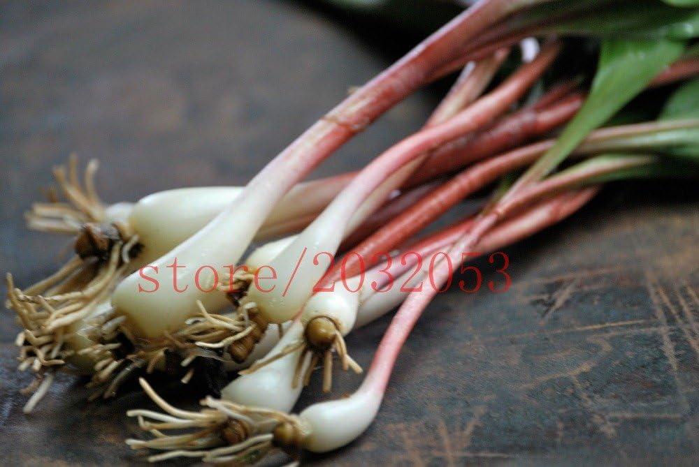 Amazon Com Ramp Wild Leek Seeds Allium Tricoccum Best Tasting