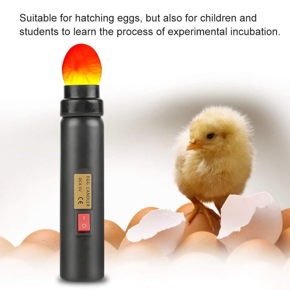 ZJchao Euro Plug Quail Egg Fertilization Checker Egg Incubator