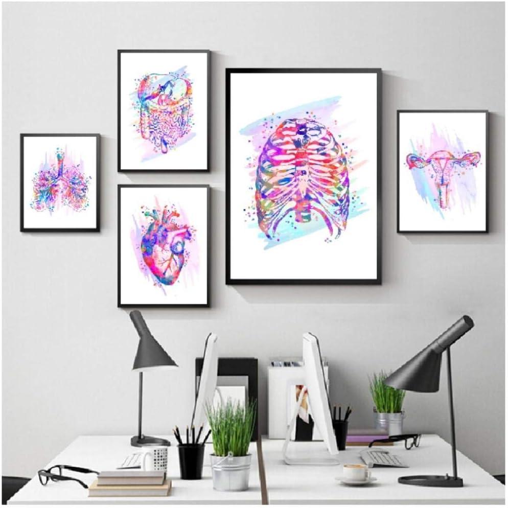 sin marco Impresi/ón de anatom/ía /Órganos anat/ómicos Cartel Cerebro Coraz/ón Pulmones H/ígado Pelvis Caja tor/ácica Cl/ínica de pintura humana Decoraci/ón de arte de pared-30x40x2 40x60x2 50x70cm