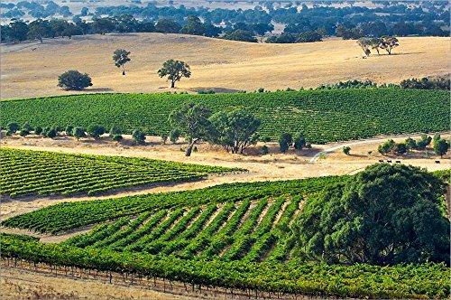 Mountadam Vineyard Winery on High Eden Road, Barossa Valley, Australia by Jay Sturdevant/Danita Delimont Laminated Art Print, 21 x 14 inches