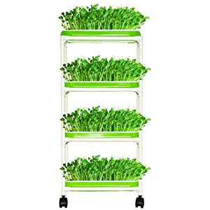 Seed Sprouter Trays