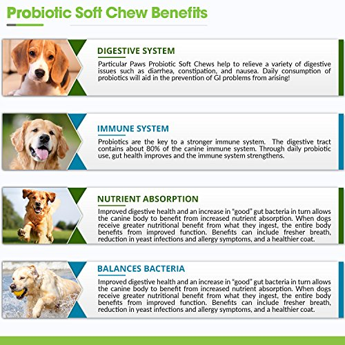 Probiotics for Dogs Treats Digestive Remedies
