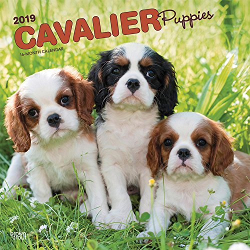 Cavalier King Charles Spaniel Puppies 2019 12 x 12 Inch Monthly Square Wall Calendar, Animals Dog Breeds Puppies (Multilingual Edition)