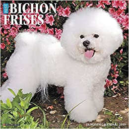 just bichons frises 2019 wall calendar dog breed calendar