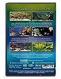 Aquarium DVD - 3 DVD SET Sea, Lakes & River Aquariums - 3 DVD Set 18 Different Themed Aquarium