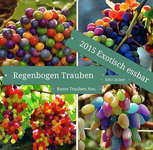 15x Regenbogen Trauben Bunt Samen Hingucker Pflanze Rarität Obst #140