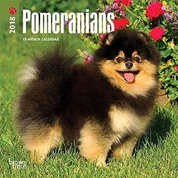 Amazon Com Pomeranian Calendar 2018 Deluxe Pomeranians Wall