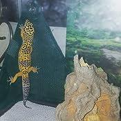 Amazon Com Zoo Med Mesh Lizard Ladder Reptile Hammock