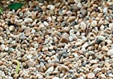 Tiny Decorative Pebbles for Miniature Gardening