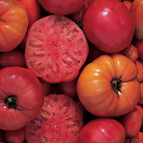 Burpee 52068A Mortgage Lifter Tomato Seeds, (Mortgage Lifter Tomato Seeds)