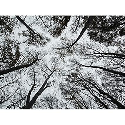 5706a33f0cf Image Unavailable. Image not available for. Color  Doppelganger33 LTD Photo  BW Autumn Forest Canopy Trees Wall Art Picture Large ...
