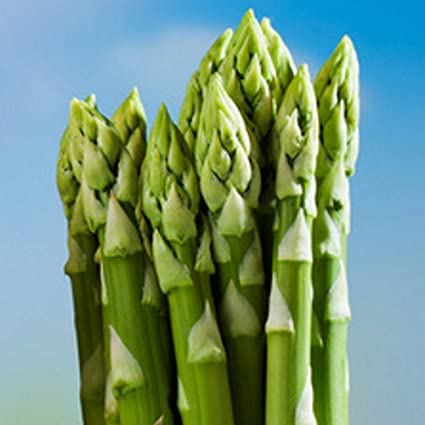 Asparagus Plants Primaverde Green Asparagus 25 Amazon De Garten