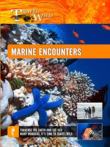 Marine Dwarf (Travel Wild - Marine Encounters)