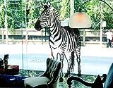 Window Sticker Zebra window film window tattoo glass sticker window art window décor window decoration window picture Color: pink; Dimensions: 83.5 x 48 inches