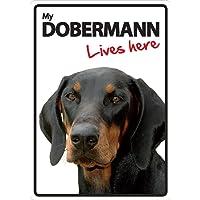 Magnet & Steel Doberman Lives Here A5señal