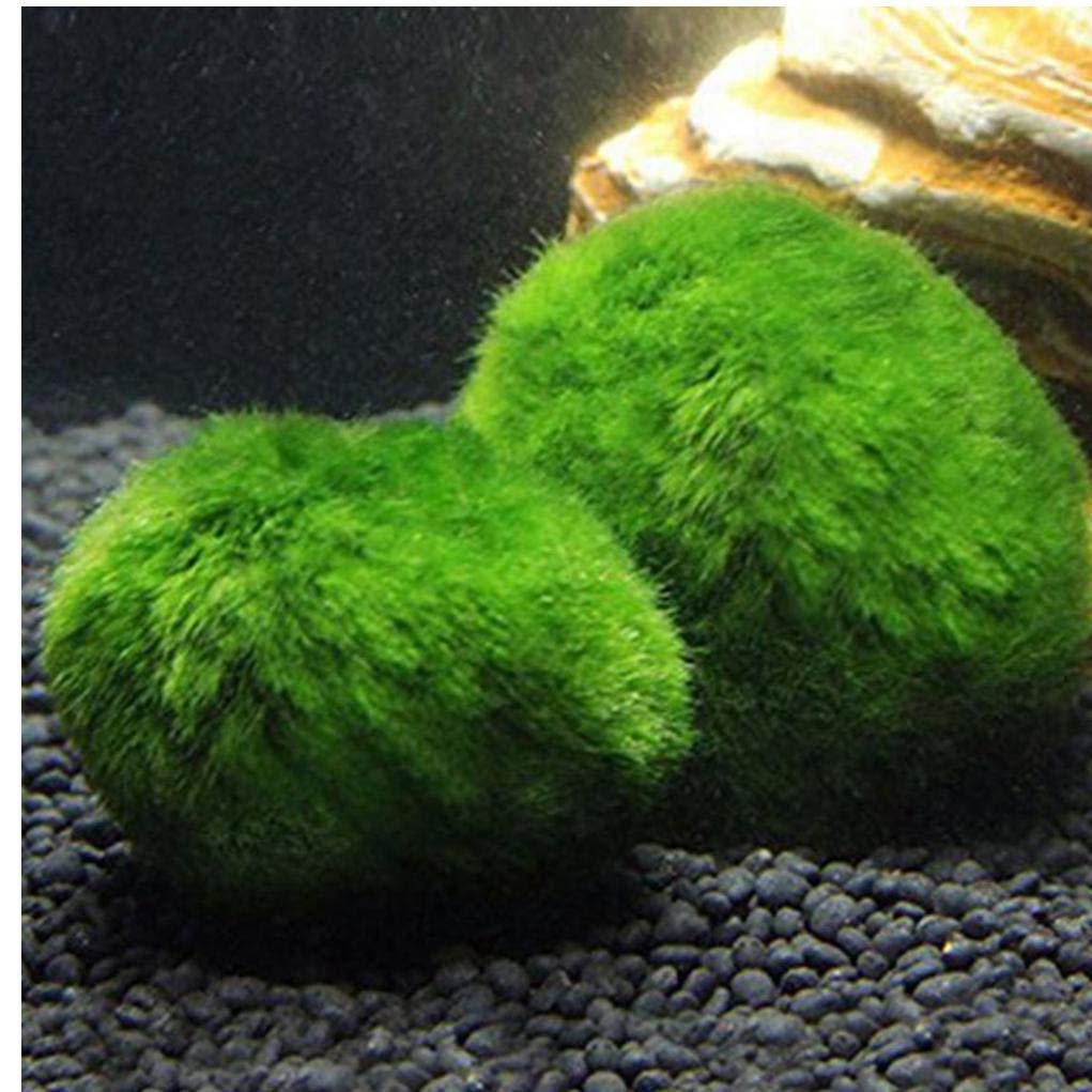 Bontand Musgo BallsSaltwater Fish Tank Ornamenta Marimo para Los Camarones Y Caracoles: Amazon.es: Productos para mascotas