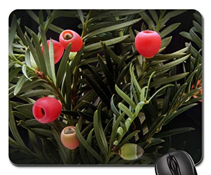 Amazon Com Mouse Pads Yew Taxus Plant Bush Periwinkle Yew
