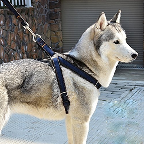 Arsom Dog Leash Harness Adjustable Durable Leash Set Heavy Duty Denim Pet Leash Collar for Dogs of All Sizes Perfect for Daily Training Walking Running (X-Large, Black)