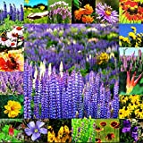 All Perennial Wildflower Mix Seeds (1600 to 40 LB) Flower Easy Grow 6 (3.6 million seeds, or 10LB)