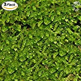 Luffy Wild Christmas Moss in Loose Form by Lush, Green Moss for Aquarium Decor - Create a Moss Wall or Moss Carpet - Soft and Comforting for Fish - Shrimp's & Fry's Food