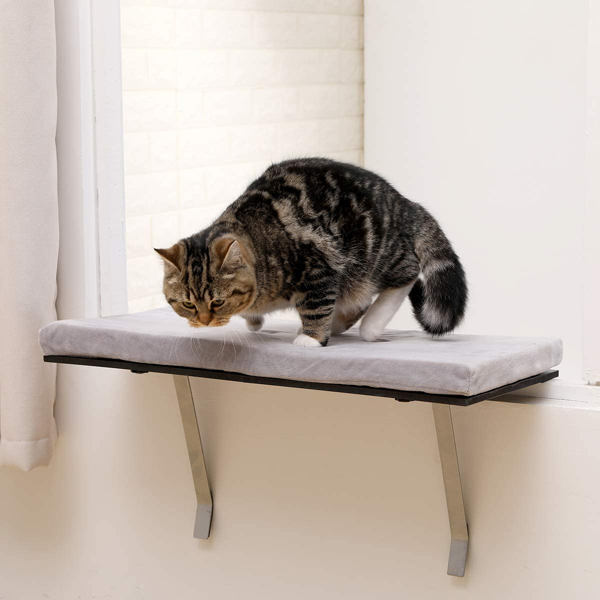 Amazon Com Sweetgo Cat Window Perch Mounted Shelf Bed For Cat Funny Sleep Diy Kitty Sill Window Perch Washable Foam Cat Seat Pet Supplies