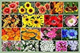 Search : Dry Area Wildflower Seed Mix - Annuals and Perennials