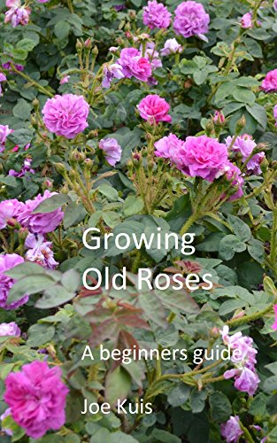 Growing Old Roses A Beginners Guide Kindle Edition By Joe Kuis