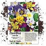 Seed Needs, Giant Star Columbine Mix (Aquilegia caerulea) - 500 Seeds