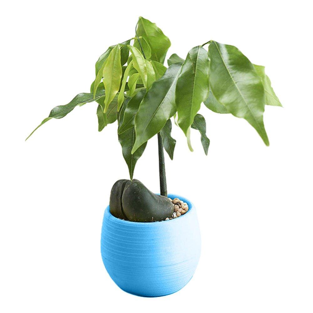 Iusun Mini Round Plant Flower Planter for Succulent Plants Air Plants Cacti Artificial Plants Storage Organizer Patio Home Office Garden Yard Rectangle Indoor/Outdoor Decor Hot (Blue)