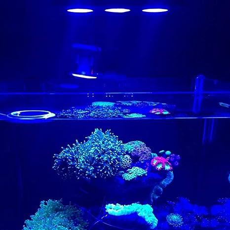 Iluminación para agua salada con luz LED para acuario 30W para interiores Iluminación LED de agua
