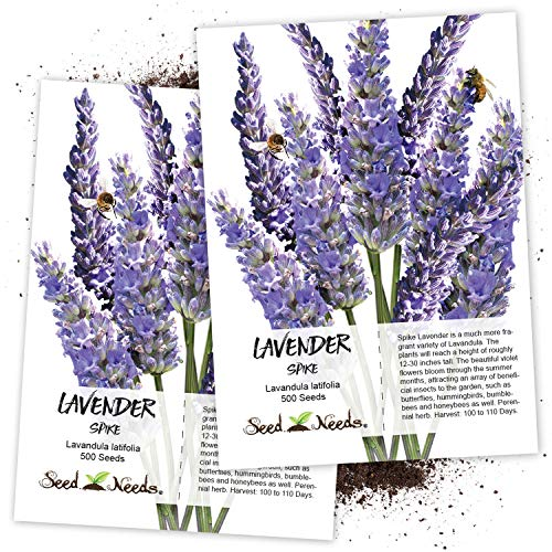 Seed Needs, Spike Lavender (Lavandula latifolia) Twin Pack of 500 Seeds Each (Best Place To Grow Lavender)