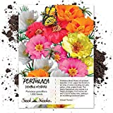 Package of 1,000 Seeds, Portulaca Double Mix (Moss Rose) Open Pollinated Seeds by Seed Needs