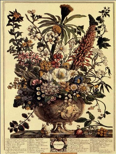 Robert Furber - Twelve Months of Flowers 1730/December 15 x 20 (Flowers Months Twelve Of)