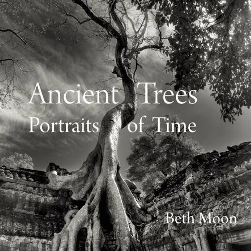 Ancient Trees: Portraits of Time - Portrait Standing