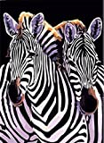 Colour Talk Diy oil painting, paint by number kit - Two Zebras 1620 inch.