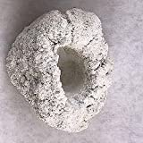 Product review for 2.5-3.5 Inch Medium Anemone Cradle Natural Reef Rock Made With Cured Aragonite from Fishnreef