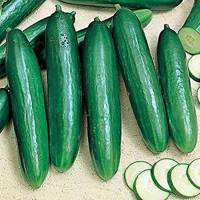 Cucumber beit Alpha Seeds (avg 50-100) Seeds 6 : Garden & Outdoor