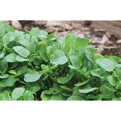 Cutdek HERB, Belle ISLE Cress 200 Heirloom Seed. : Garden & Outdoor