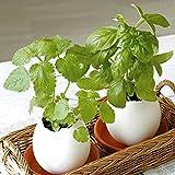 Creative DIY Mini Lucky Egg Potted Plant Office Desktop Home Decor