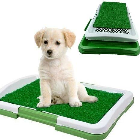Potty Pactch Dobo® - Inodoro mini para perros y gatos cachorros de pequeño