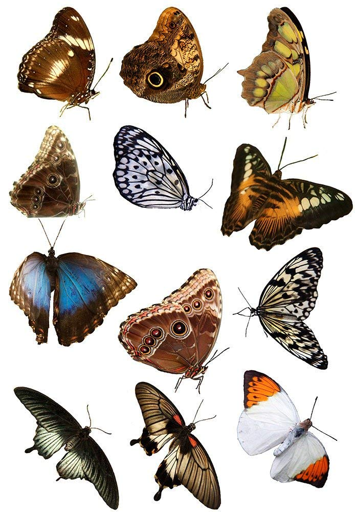 Enamel Glass Decal to Choose from Ceramic Decal Moths and Butterflies 89283 Choose Either Ceramic Images 3 Different Size Sheet Waterslide Decal or Glass Fusing Decals Enamel Decal