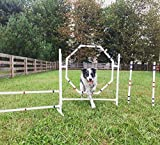 Dog Agility Equipment-Practice Tire/Hoop Jump