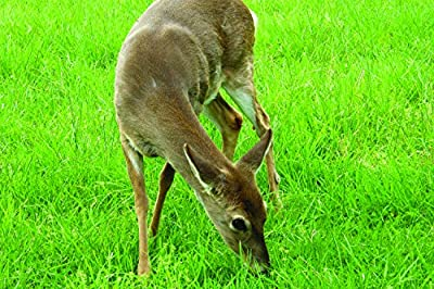 Southern Subtropics Big Game Food Plot Seed Blend