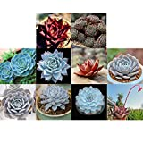 Youcoco New Nice Adorable Flower Fragrant Seeds Blooms Radiation Protection Succulent Plants Seeds Flowers
