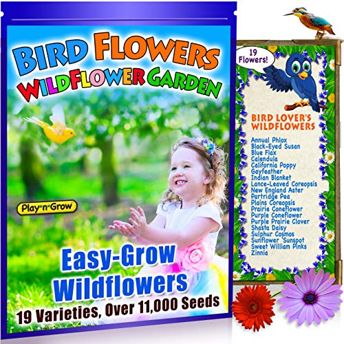 Bird Flowers! Children's Widlfower Garden Attracts Birds! 19 Bright, Colorful, Easy-to-Grow Wildflowers Seeds. Plants up to 25 Sq Ft .100% Heirloom, Non-GMO. Unique Kids Gift. Fall Planting.