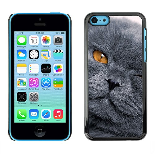 LASTONE PHONE CASE / Coque Housse Etui Shock-Absorption Bumper et Anti-Scratch Effacer Case Cover pour Apple Iphone 5C / Grey Shorthair Cat Scottish Fold Yellow Eye