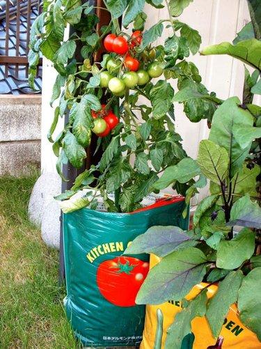 デルモンテ キッチンガーデン培養土 トマト用