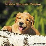 Puppies Calendar - 2017 Wall Calendars - Calendar 2016 - Dog Breed Calendars - Monthly Wall Calendar - Golden Retriever Puppies Calendar by Magnum